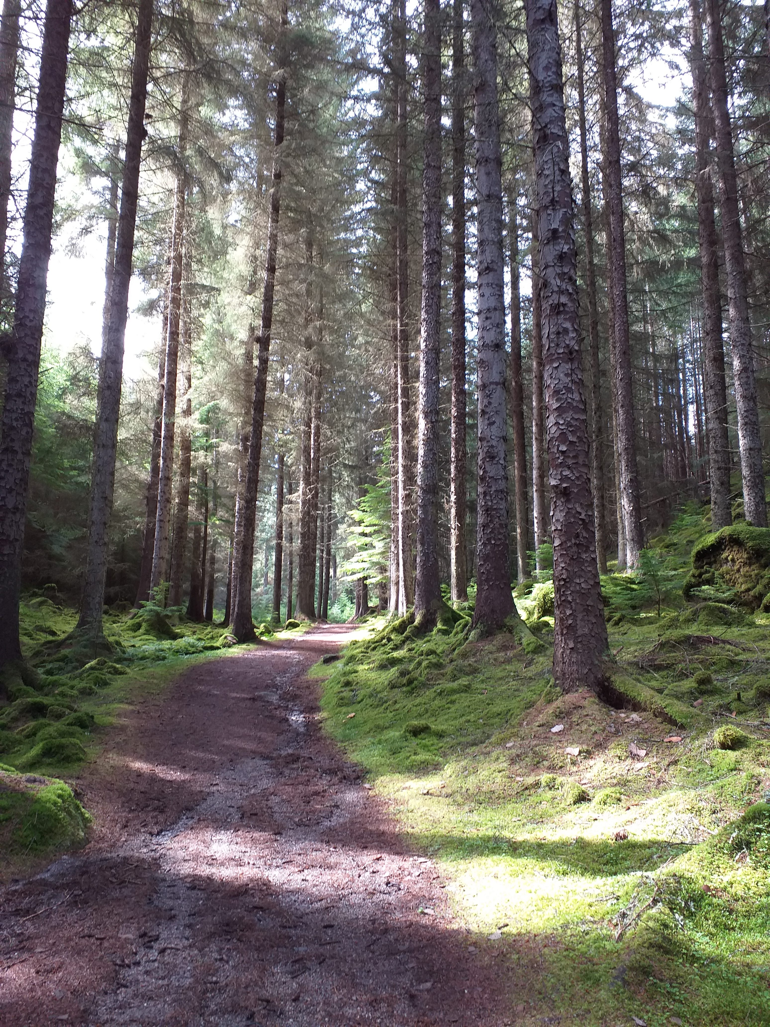 Trees along the South Loch Ness Trail in the Scottish Highlands