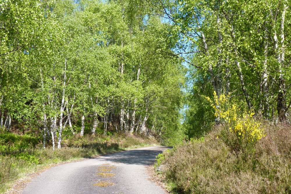 Peaceful roads on the South Loch Ness Trail in summer