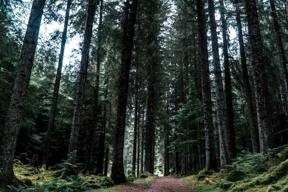 Trail through tall trees at Inverfarigaig, South Loch Ness Trail