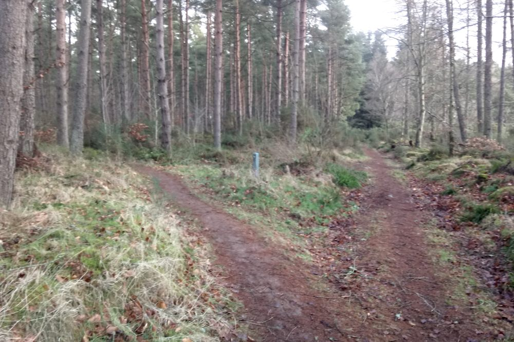 Walking trail through Torbreck Woods, South Loch Ness Trail